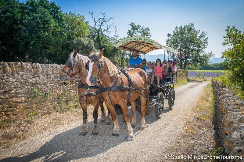 La Drôme Tourism - Studio Mir