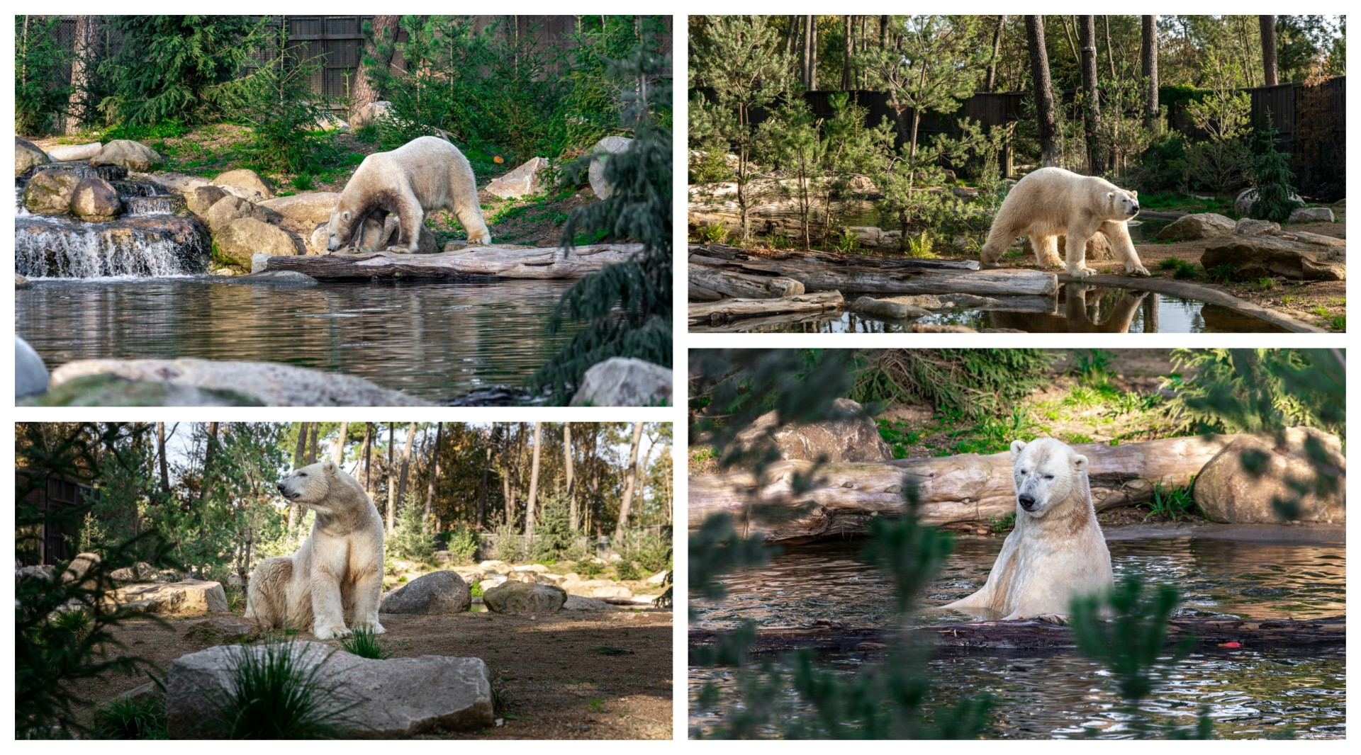 La Vallée du Loir - Ink Lodge - Zoo de la Flèche - S Le Ludec